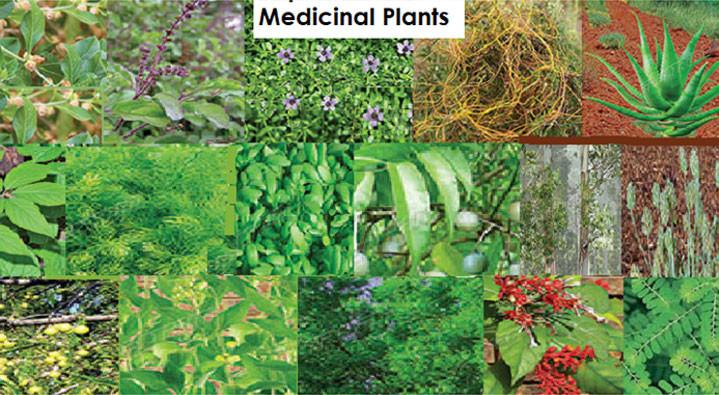 611ca5b9e9f71_Medicinal-Plants1.jpg